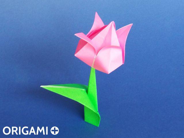 Tulipe - étape 1