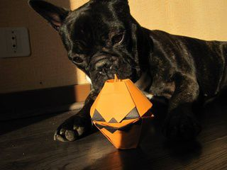 Cute Dog Playing with an Origami Halloween Pumpkin
