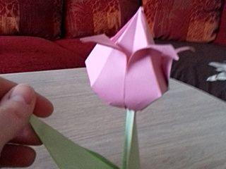 Pink paper tulip